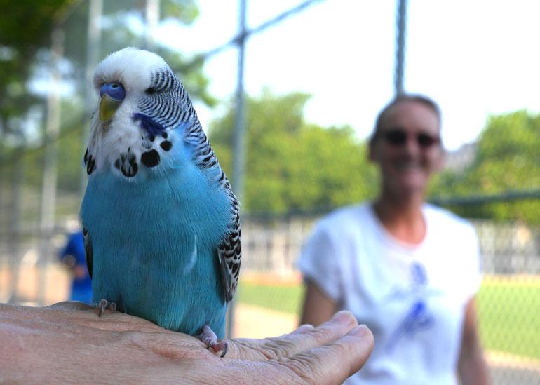 diksha-bird2