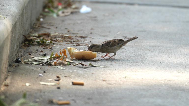 bird-lunch