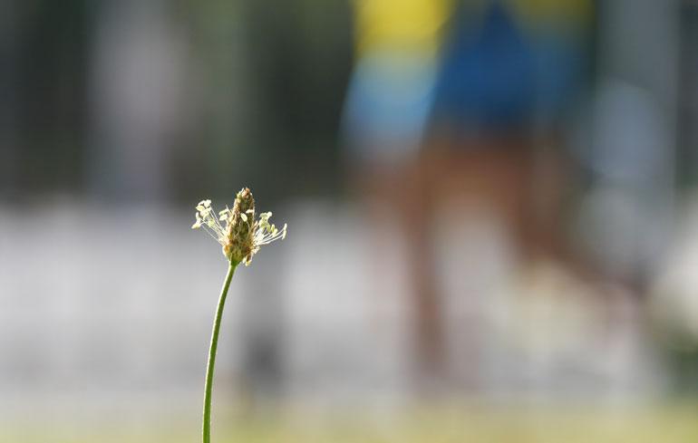 flower-mario