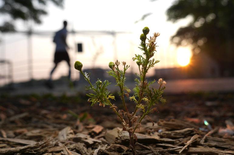flower107.jpg
