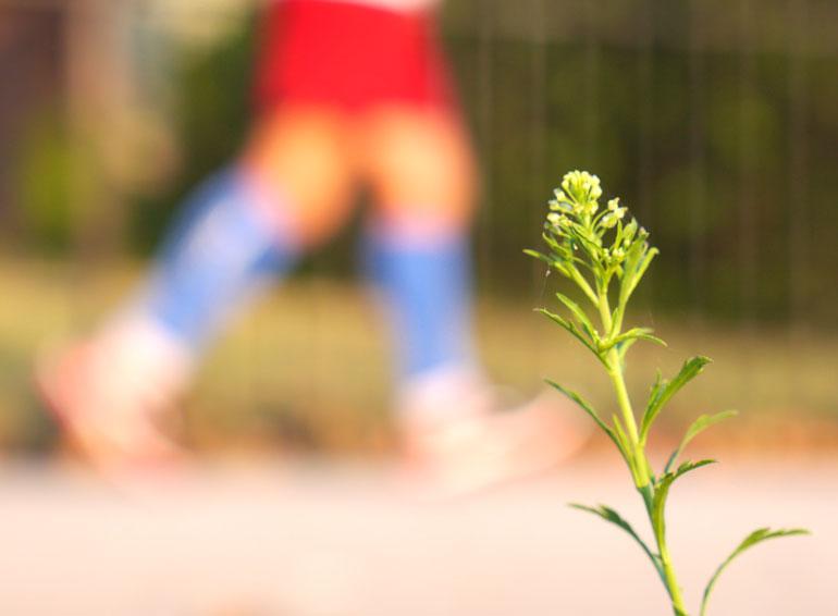flower512.jpg