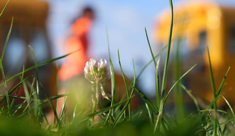flower sarah