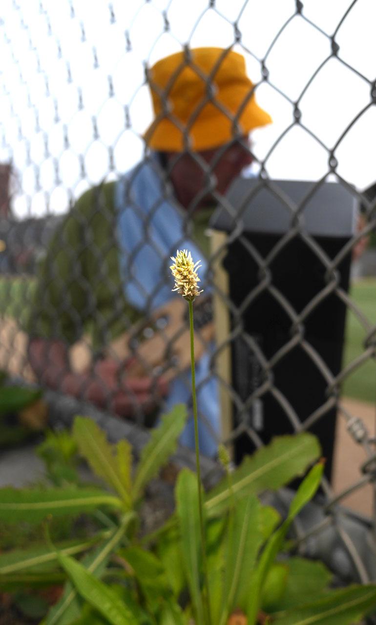 flower-kodanda