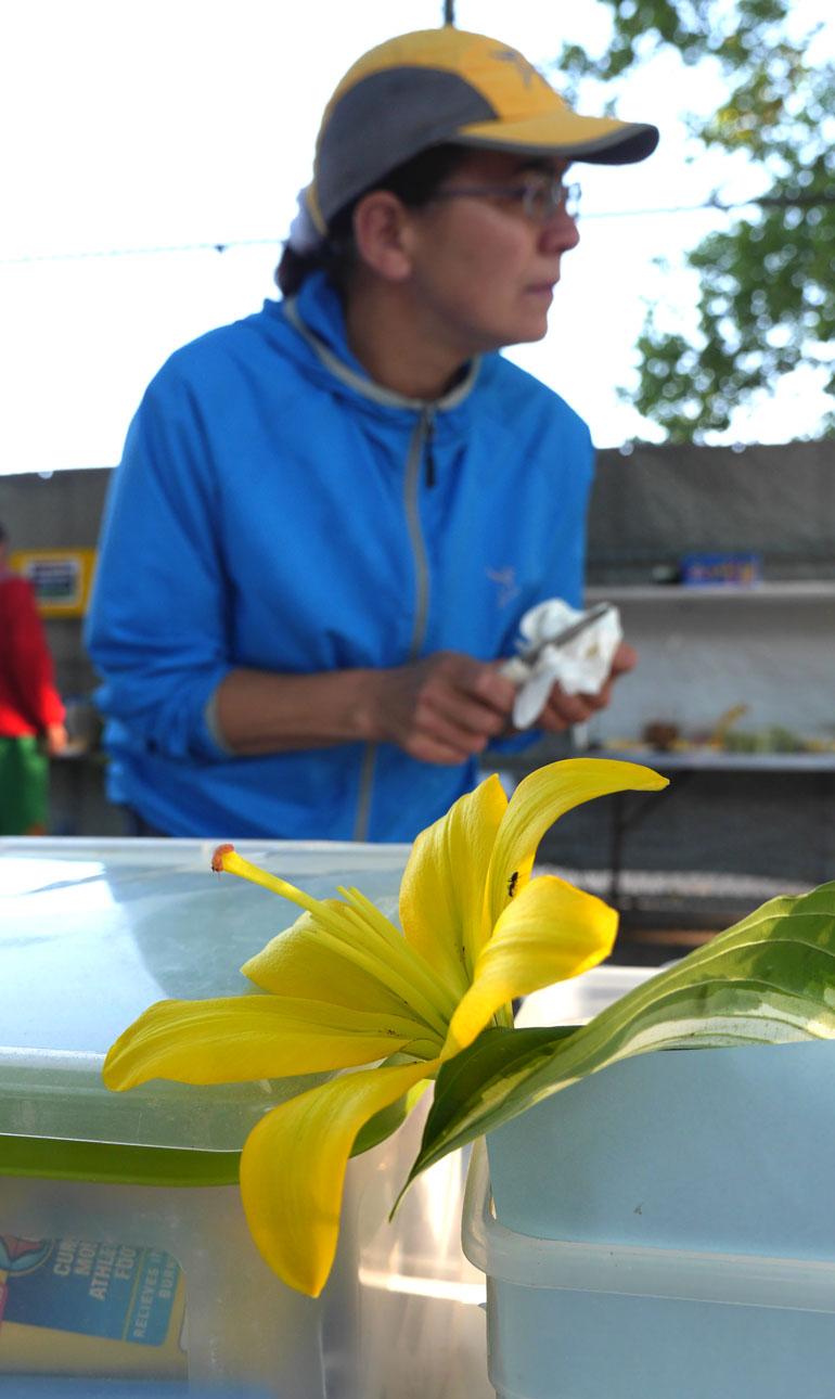 flower-pati