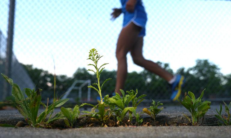 flower-sarvagata