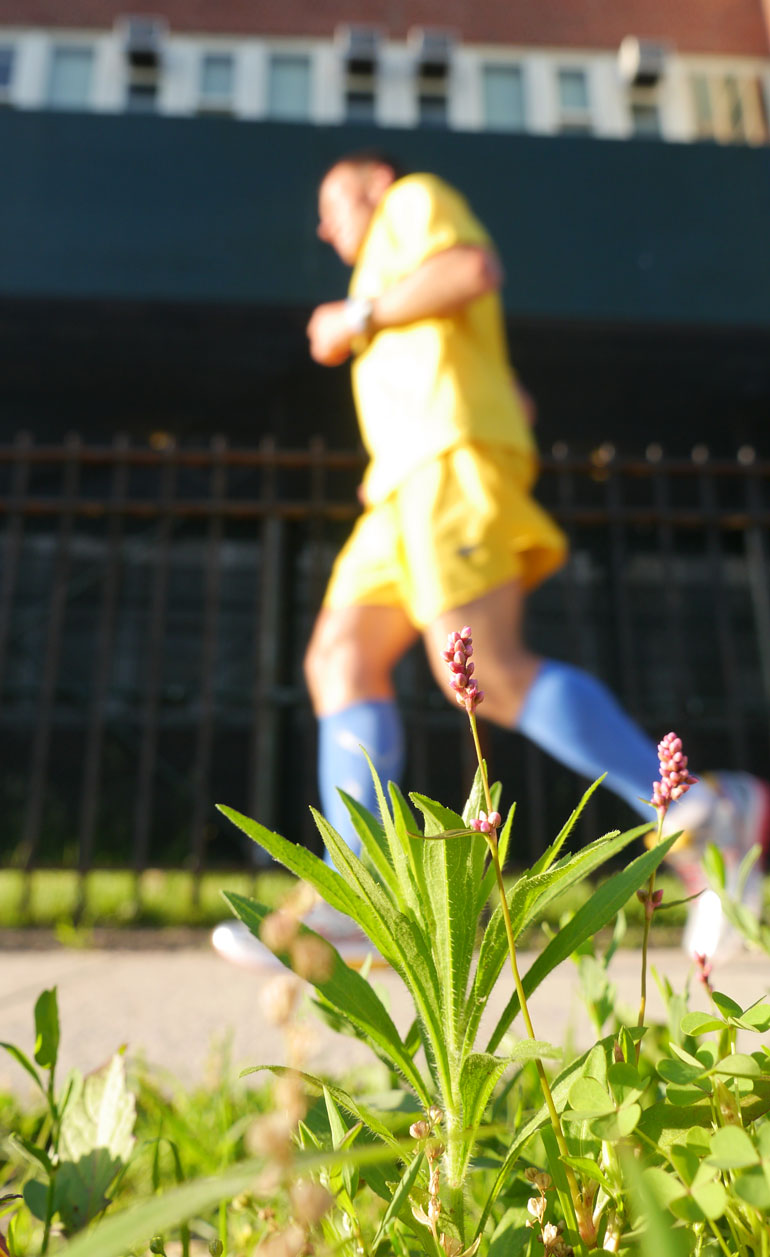 flower-vasu3