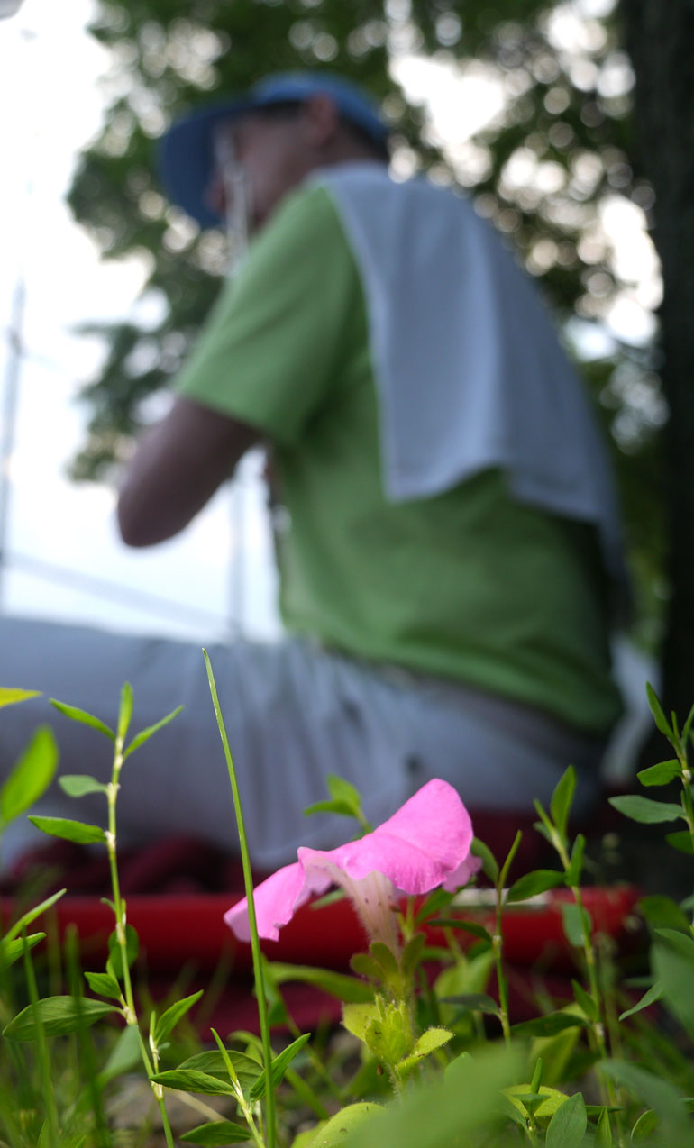kodanda-flower