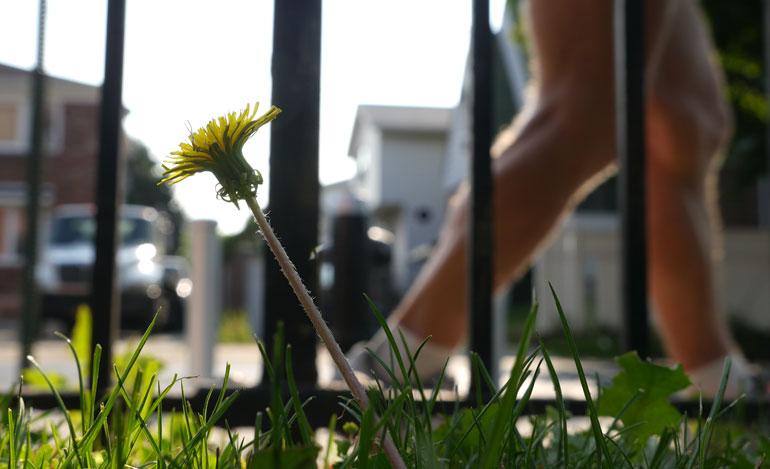 flower-2