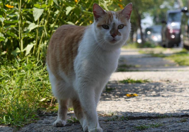 flower-cat