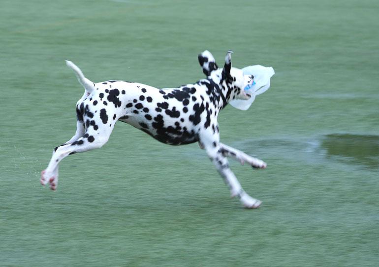 flower-dog4