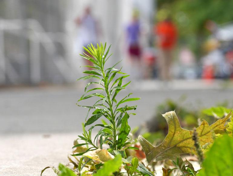 flower-jayasalini