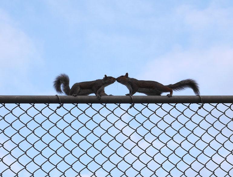 flower-squirrel-4