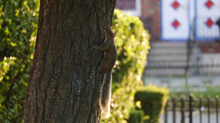 flower-squirrel2
