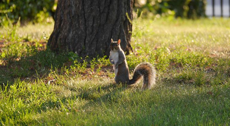 flower-squirrel3
