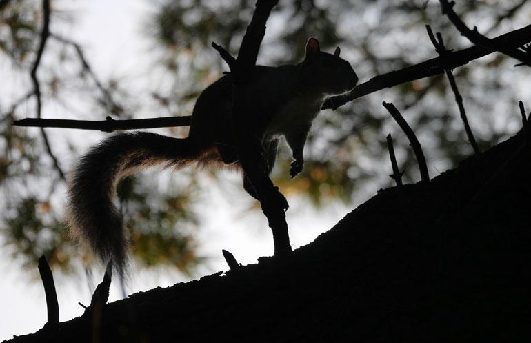flower-squirrel4