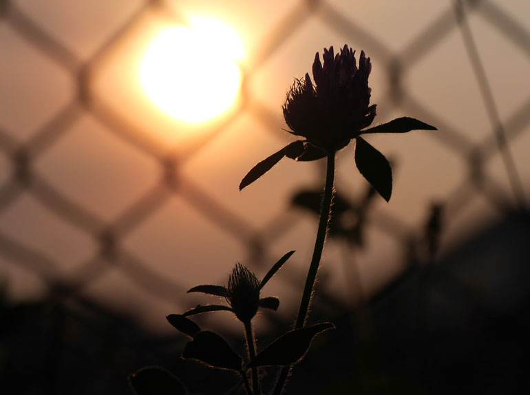 flower-sun2
