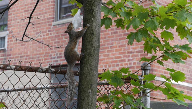 flower-squirrel