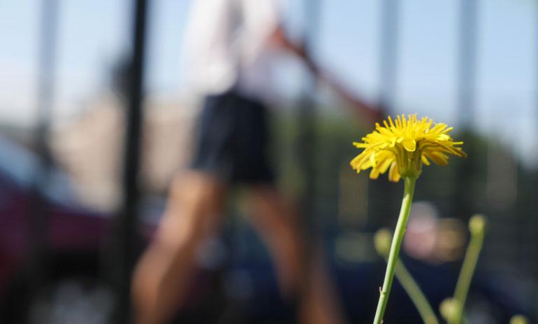 flower-teekshanam2
