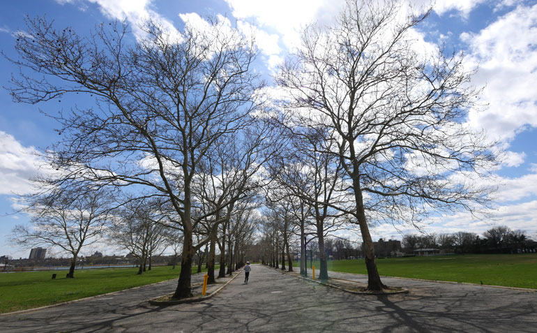 avenue-of-trees