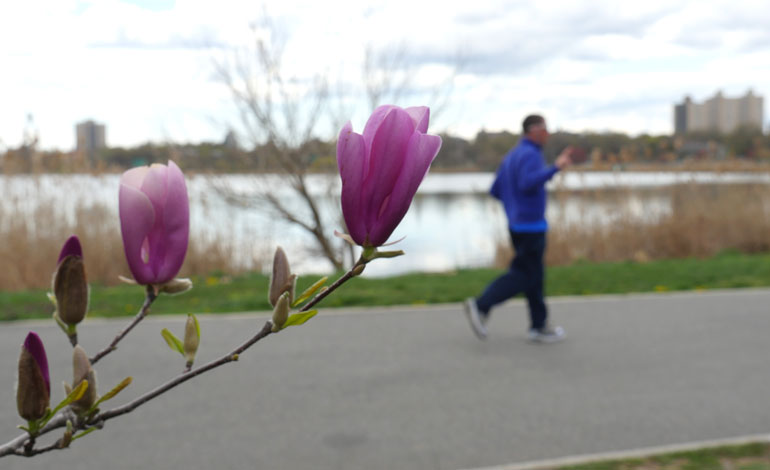 flower-janos