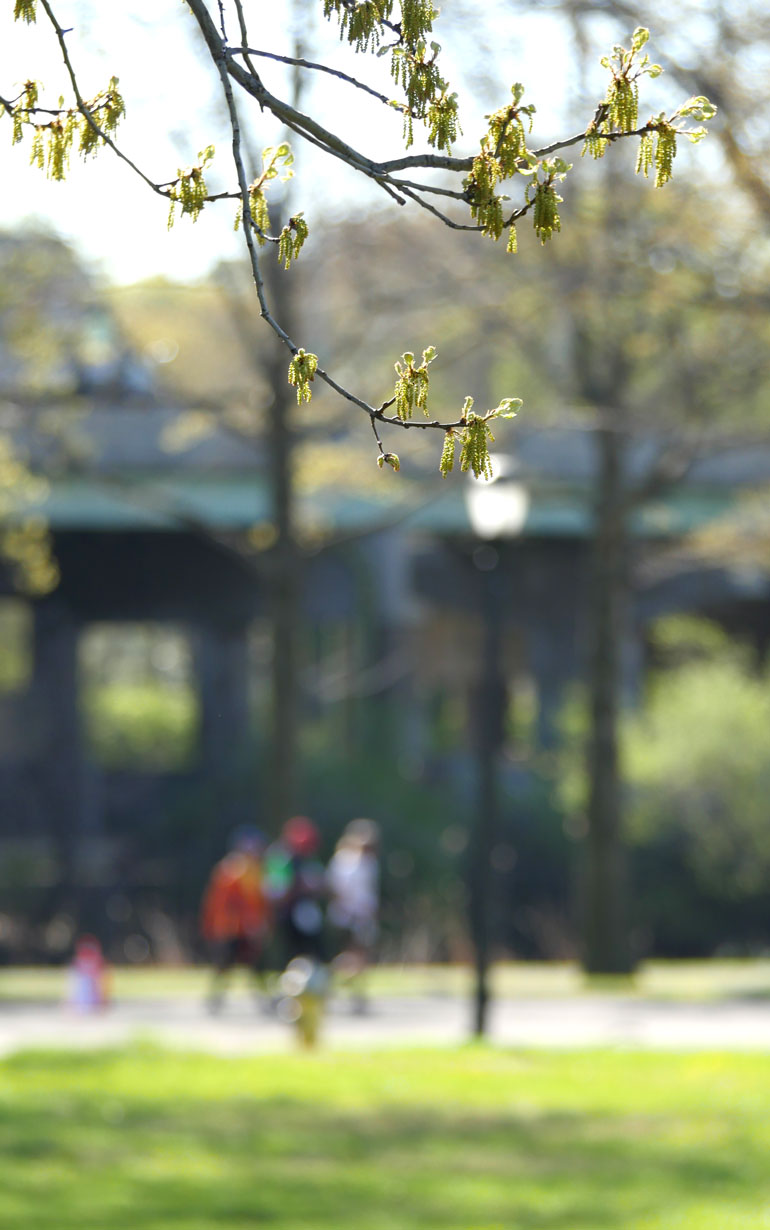 flower-tree2