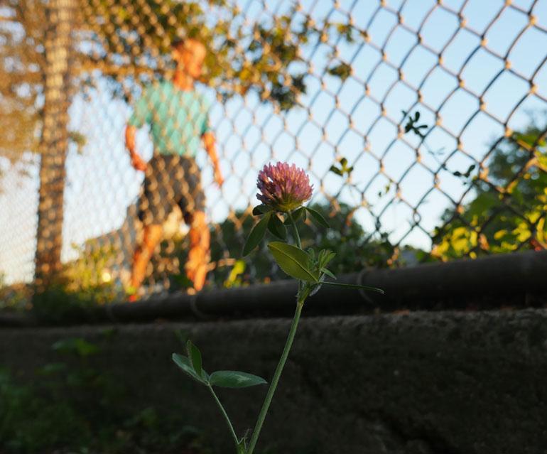 flower-ashprihanal
