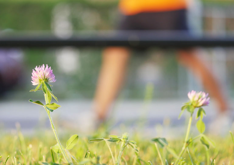 flower-final