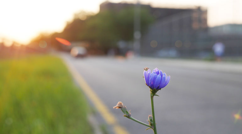 flower-final2