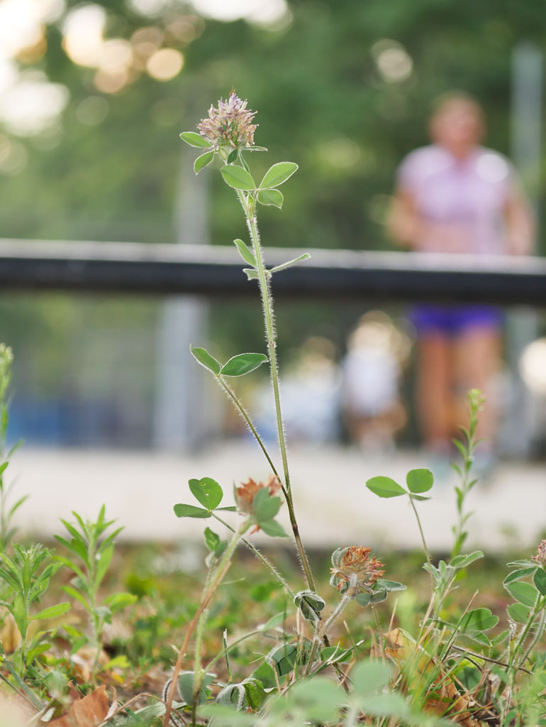 flower-kaneenika2