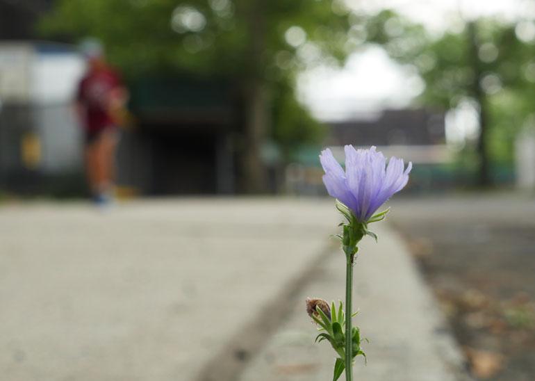 flower-vasu