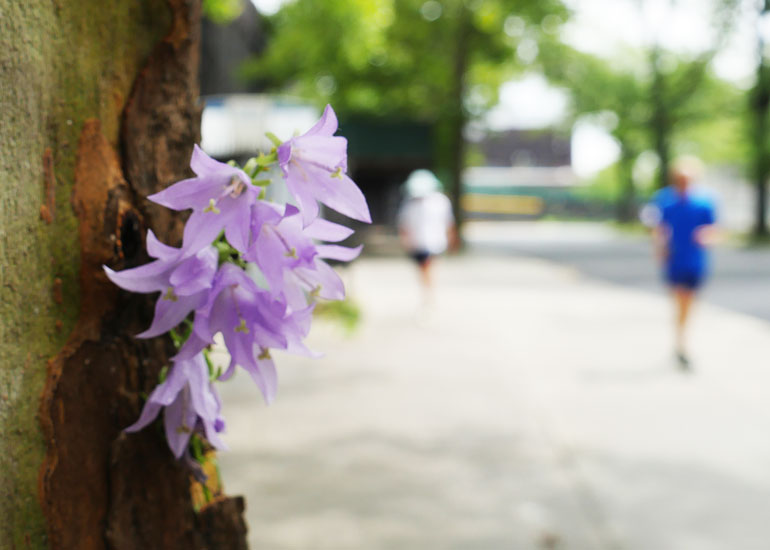 flower-yuri