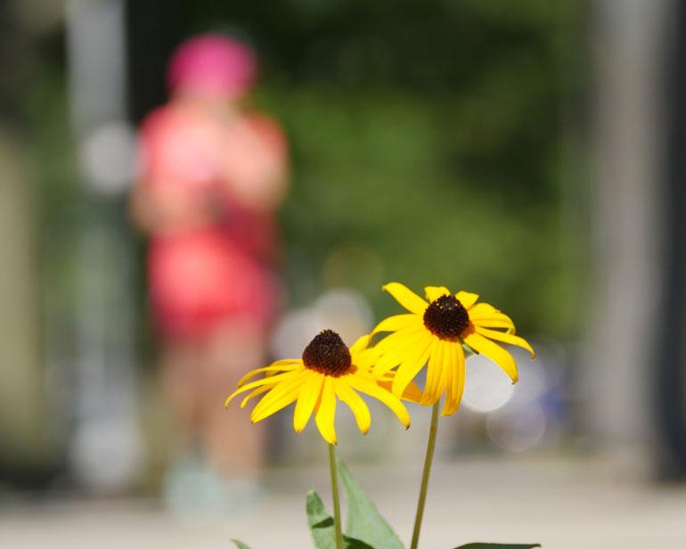 kaneenika-flower