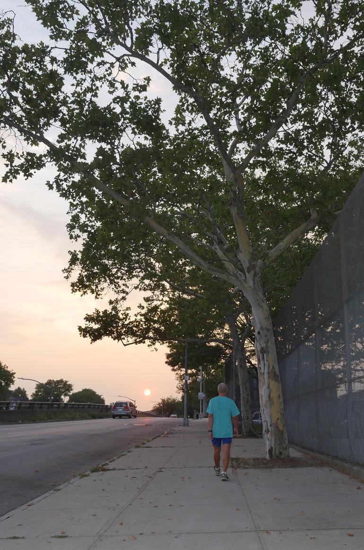 yuri-tree