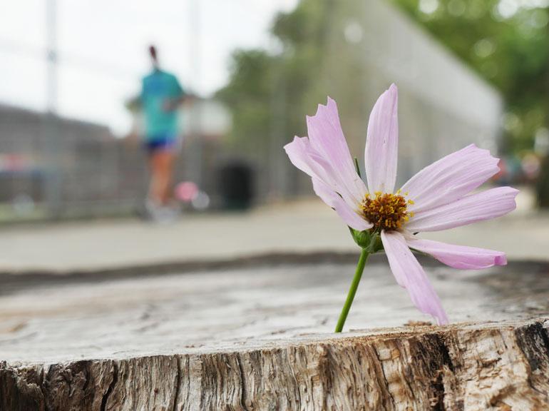 flower-atmavir