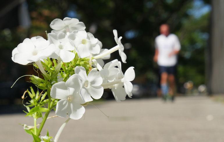 flower-nirbhasa