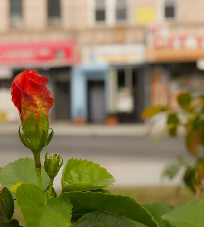 Flower1-1190868