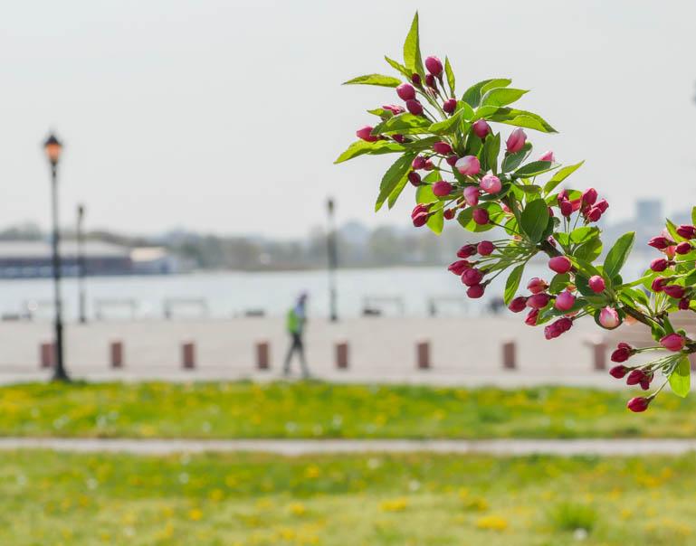 flower-1220036
