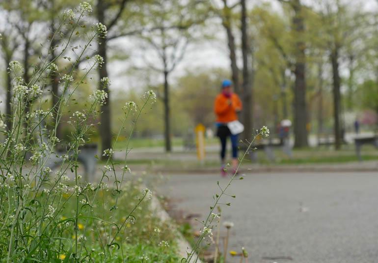 flower-1230313