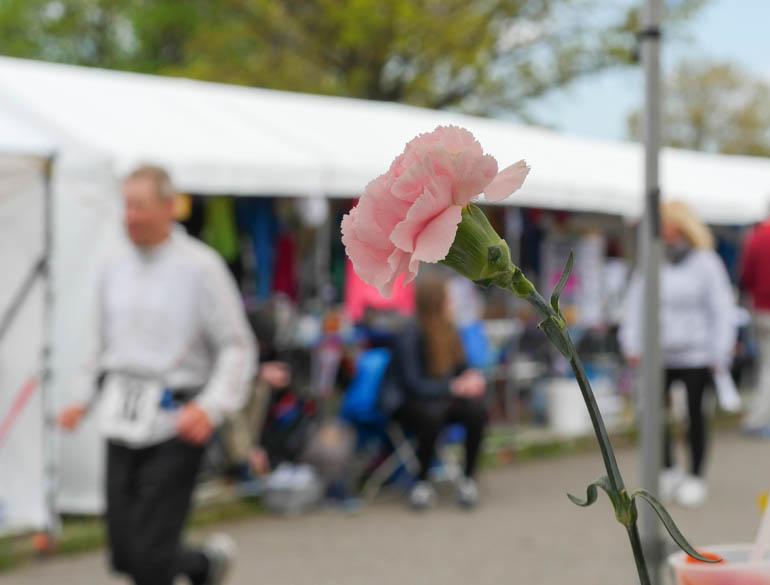 flower camp-1230638