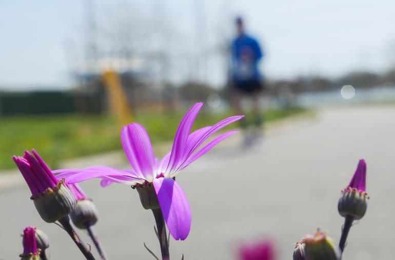 flower final-1210815