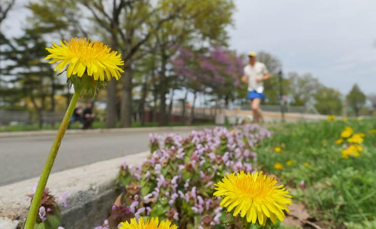 flower final-1220429