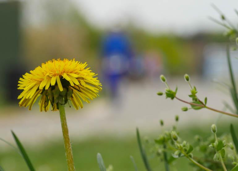 flower final-1240248