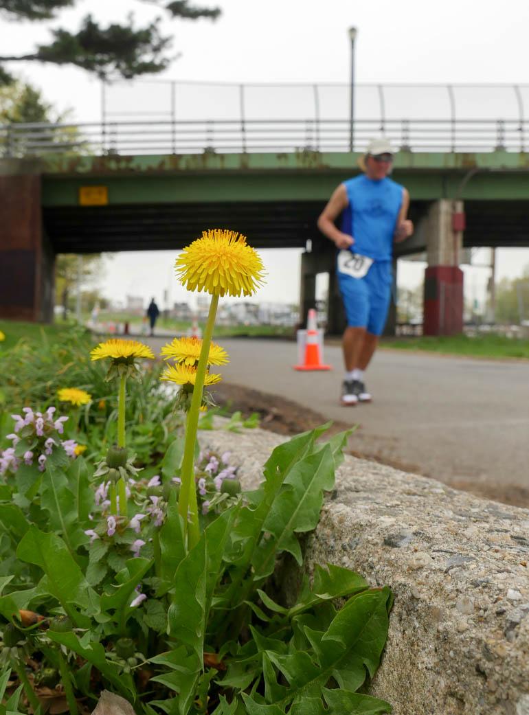 flower janos-1230135