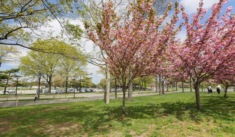 flower tree-1230756