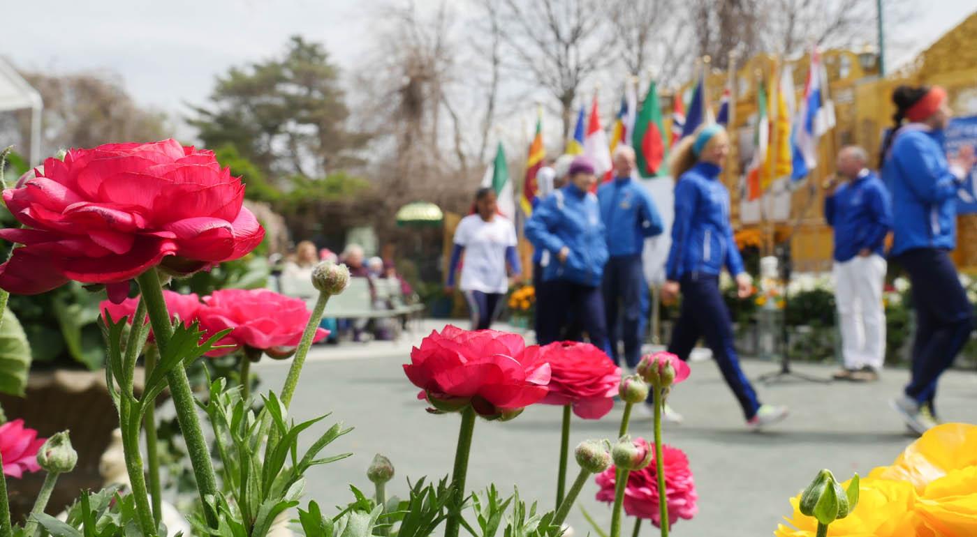 flower2-1200670