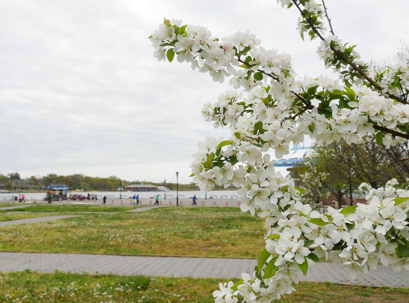 flower2-1240545