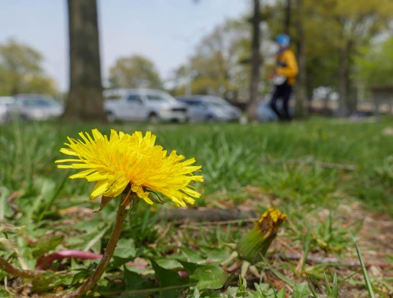 flower3-1230379