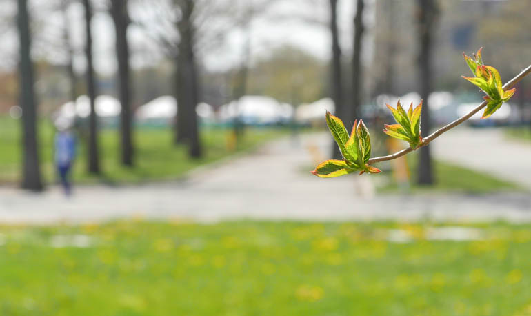 flower4-1210495