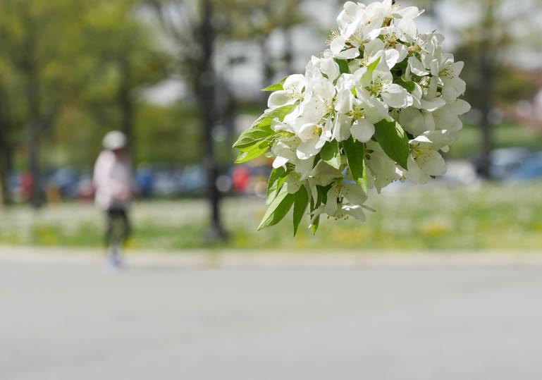 flower5-1230879