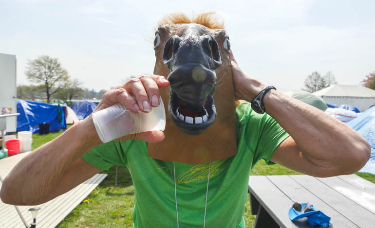 horse-1210986